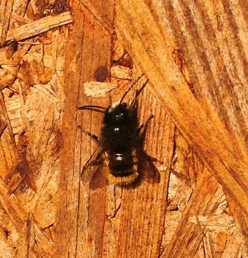 Insect Invertebrate Animal Themes Animal Wildlife Animals In The Wild Animal One Animal