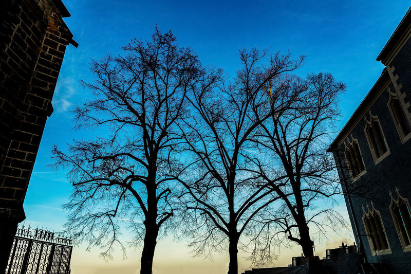 Low angle view of silhouette trees and buildings against sky