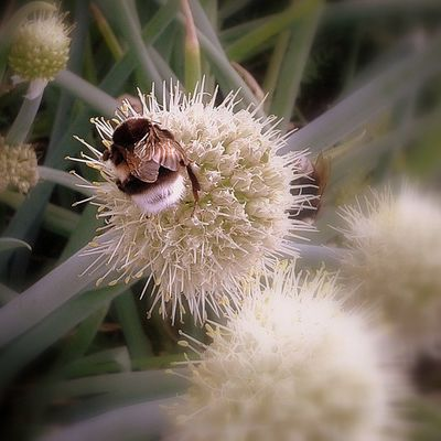 омск выставкаомск Nature Summer Bumblebee Flower