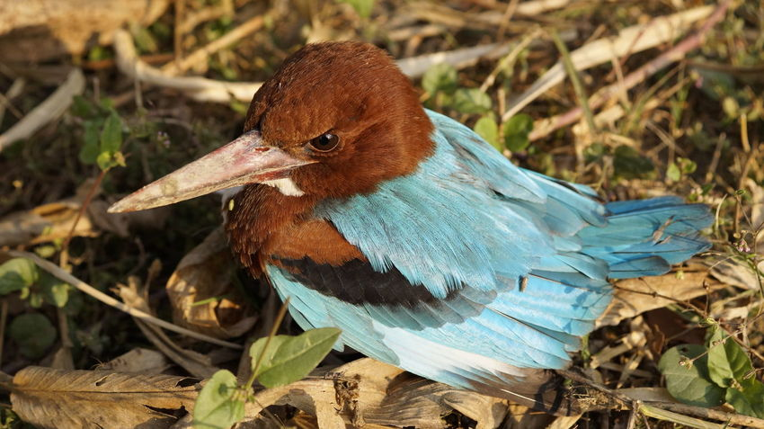 The little Kingfisher Animal Themes Animals In The Wild Bird Close-up Day Field Kingfisher Bird Nature No People One Animal Outdoors Perching Plant