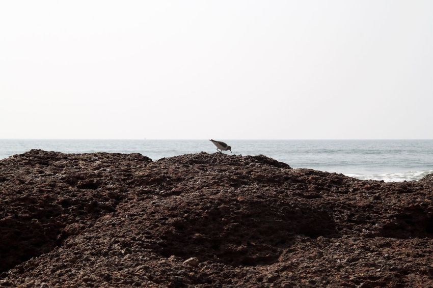 Animal Themes Animal Wildlife Animals In The Wild Ashvem Ashvem Beach Beach Beach Life Beauty In Nature Bird Goa Horizon Over Water India Nature No People North Goa One Animal Outdoors Perching Sea Tranquility Water