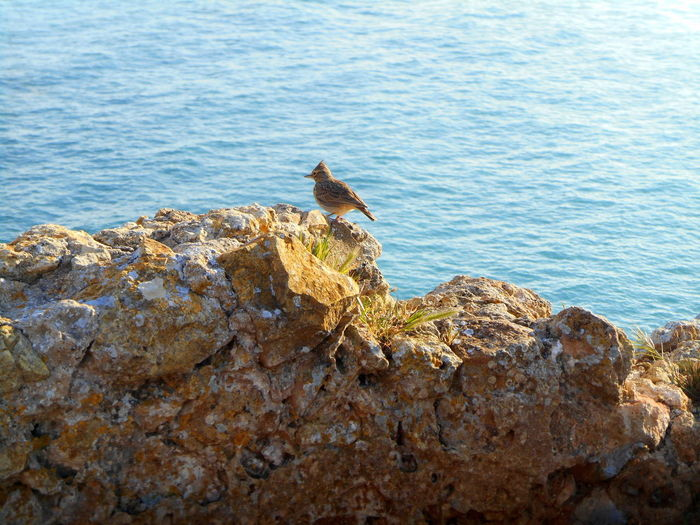 High angle view of bird perching on rock by sea