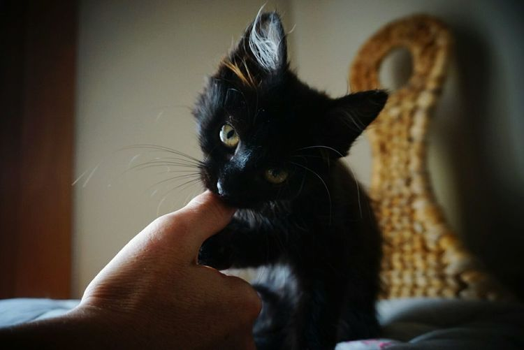 Close-up of hand with kitten