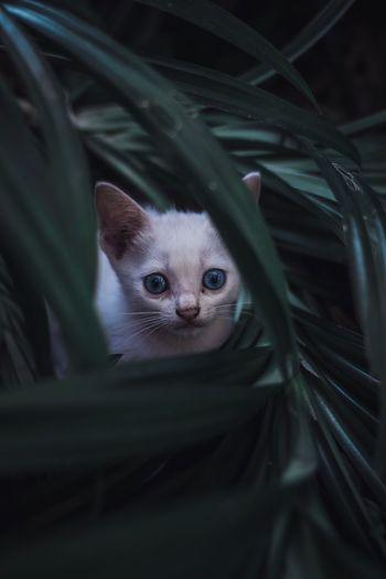 Close-up portrait of kitten amidst plants