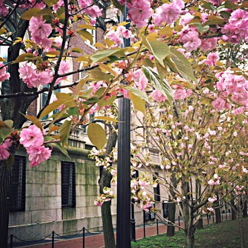 Blossoms  University Spring Flowers Urbanphotography