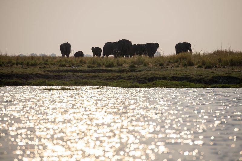 Elephants standing on field by lake against sky