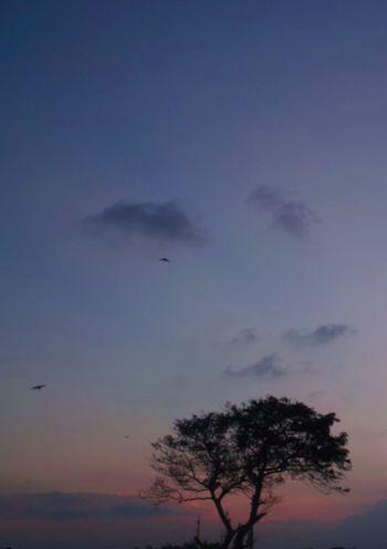 おつかれさま。 SigmaDP1X 夕暮れ時 Sunset Afterglow おつかれさま