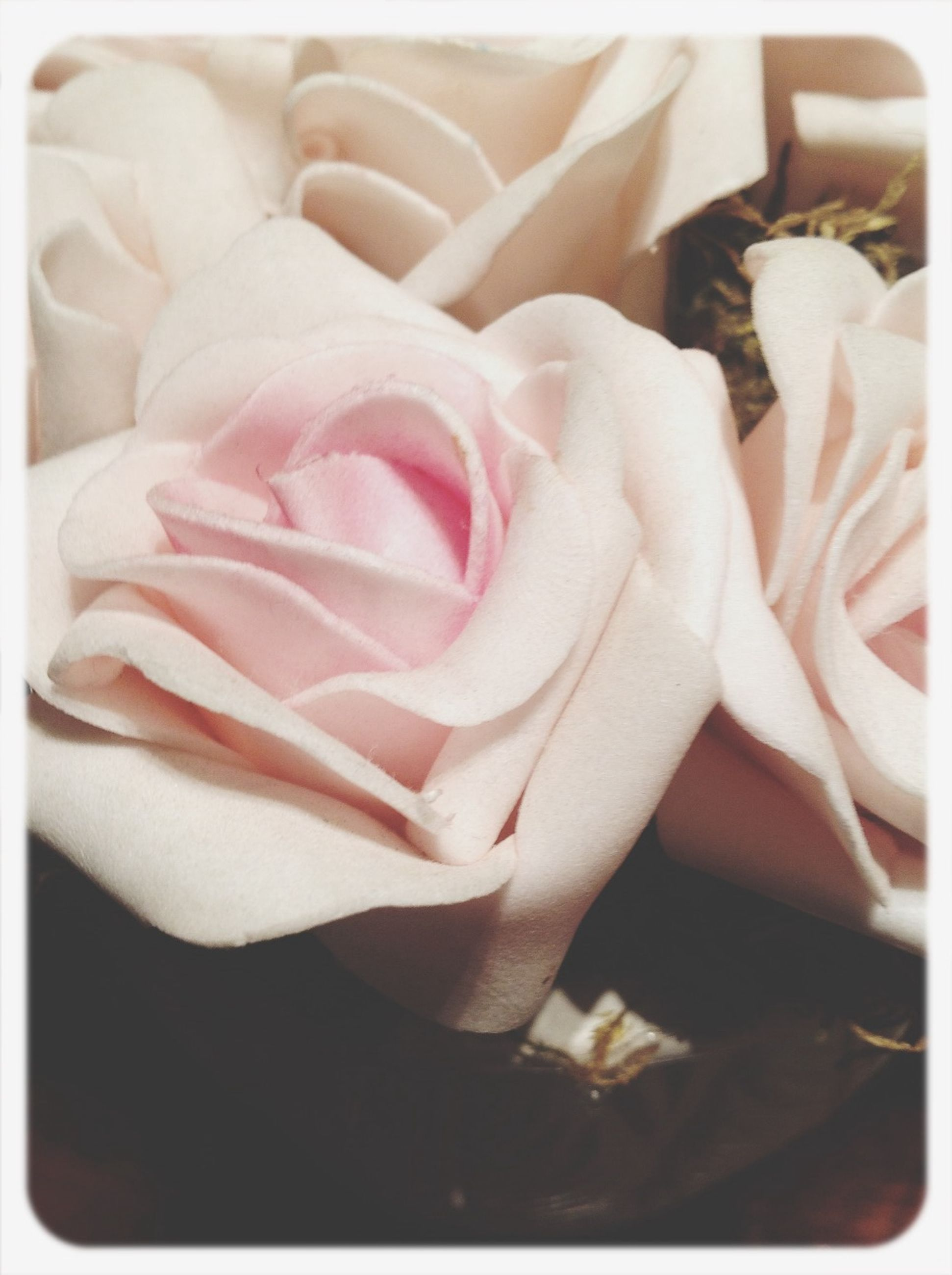 transfer print, auto post production filter, flower, close-up, petal, indoors, fragility, flower head, high angle view, freshness, one person, rose - flower, pink color, nature, beauty in nature, part of, day, detail, single flower