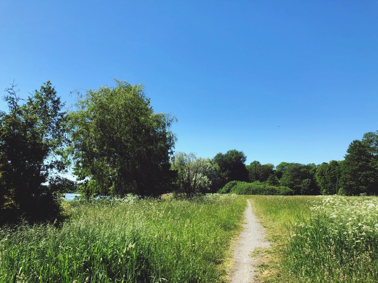 plant, tree, sky, growth, clear sky, tranquility, grass, nature, field, land, tranquil scene, beauty in nature, landscape, environment, the way forward, blue, green color, direction, day, no people, outdoors, trail