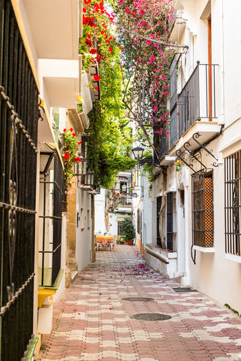 Typical old town street in Marbella, Costa del Sol, Andalusia, Spain, Europe Typical Old Town Street In Marbella, Costa Del Sol, Andalusia, Spain, Europe SPAIN MarbellaSpain Old Town Europe Architecture Building Exterior Built Structure Building Residential District Plant City The Way Forward Street Footpath Direction House Tree No People Nature Alley Day Outdoors Entrance Lighting Equipment Apartment My Best Photo
