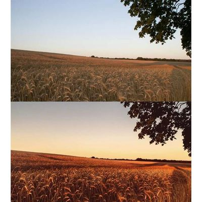 """A """"before and after"""" picture. I am always amazed at how much you can get out of images. Beforandafter Michaellangerfotografie Summer Sunset Fotografie Photography Photographyislife Germany Brandenburg CripixtMovement Earthshoot"""