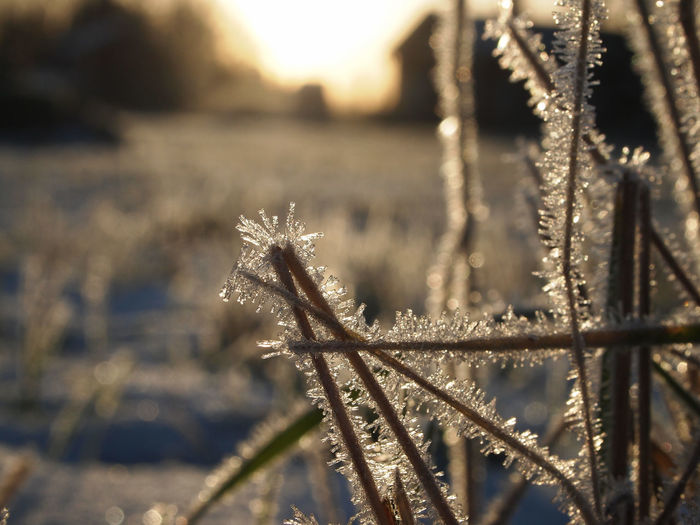 Atumn Colors Autumn Freshness Frost Grass Low Angle View Winter Beauty In Nature Close-up Cold Temperature Day Focus On Foreground Frozen Growth Nature No People Outdoors Plant Winter