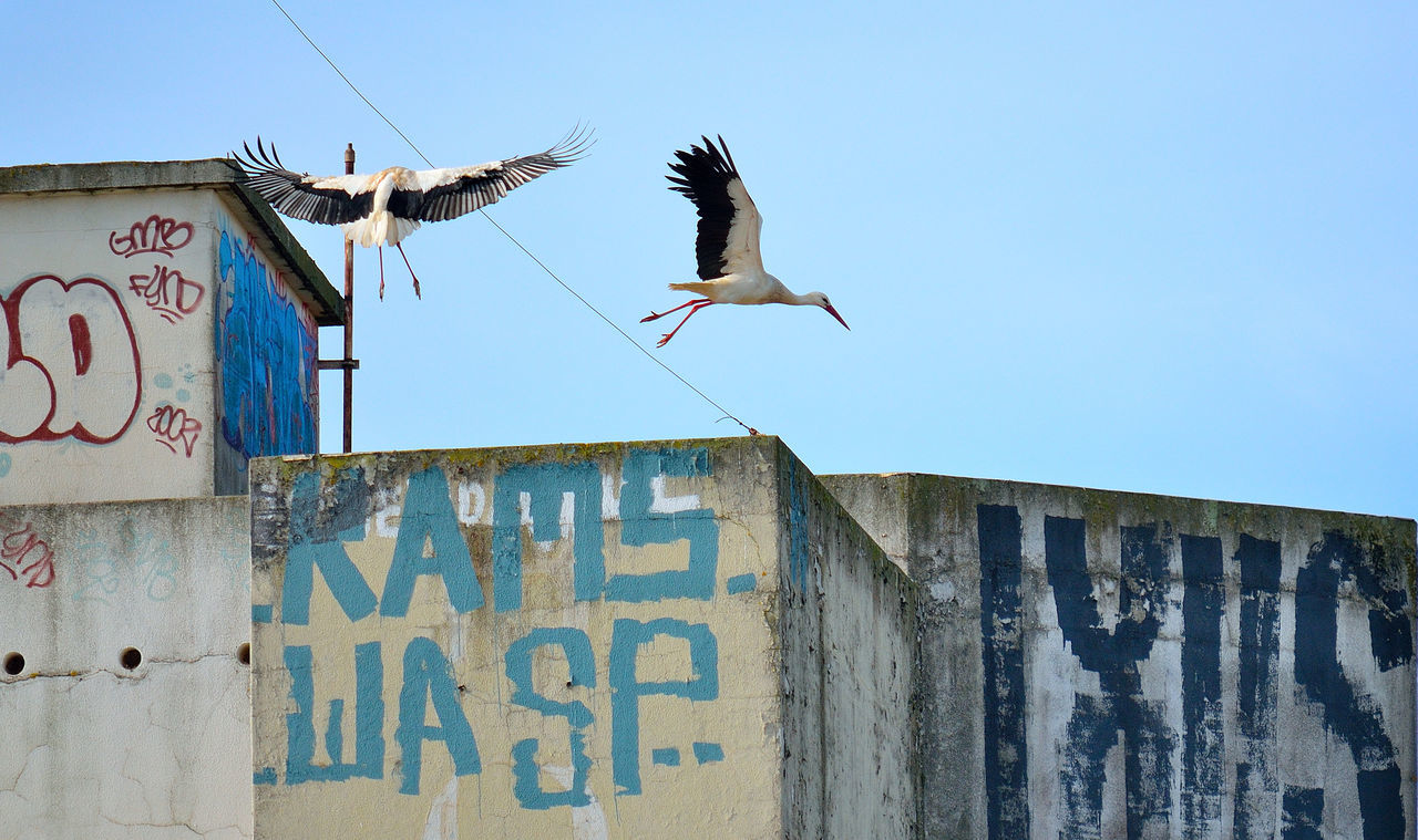 Low angle view of stork flying over building against sky