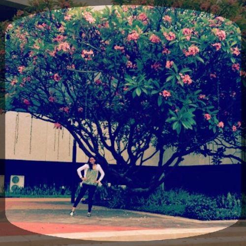 Cherryblossoms Madeinthephils Yahoooooo❤👏❤