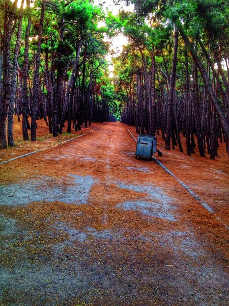 First Eyeem Photoem photo Enjoying Life Relaxing Hello World Forest j