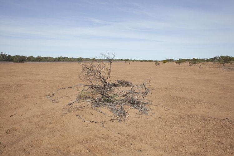 Australian Desert Australian Desert Bare Tree Deserts Around The World Dried Plant Dry Field Landscape Non-urban Scene