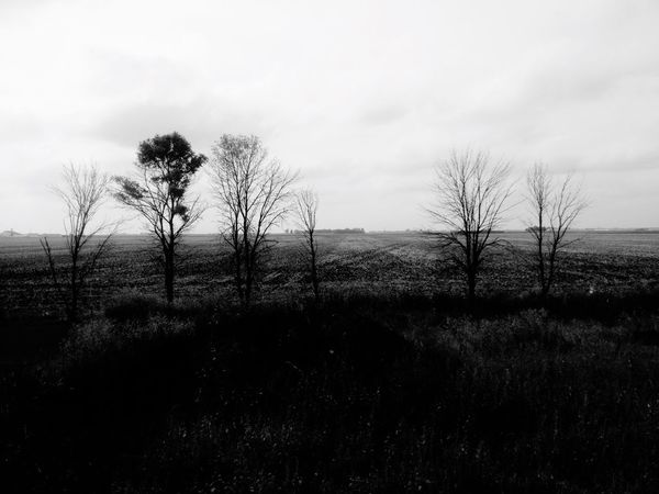 QVHoughPhoto Moorhead Minnesota Landscape Trees Blackandwhite MidWest IPhoneography IPhone4s