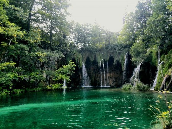 Tree Water Green Color Nature Beauty In Nature Day Outdoors