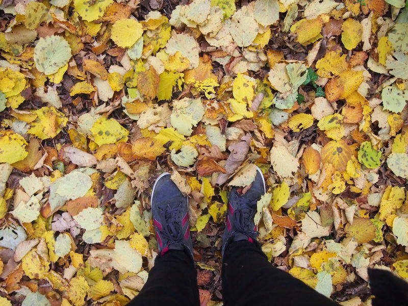 Adults Only Autumn Change Close-up Day Fallen Human Body Part Human Leg Leaf Leaves Lifestyles Low Section Maple Leaf Nature One Man Only One Person Outdoors Personal Perspective Real People Standing Yellow