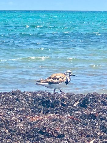 Sand piper Sand Piper Sea Water Beach Animal Themes Animal Land Vertebrate Nature Beauty In Nature Horizon Over Water Animals In The Wild Animal Wildlife No People Sky One Animal Outdoors Horizon Day