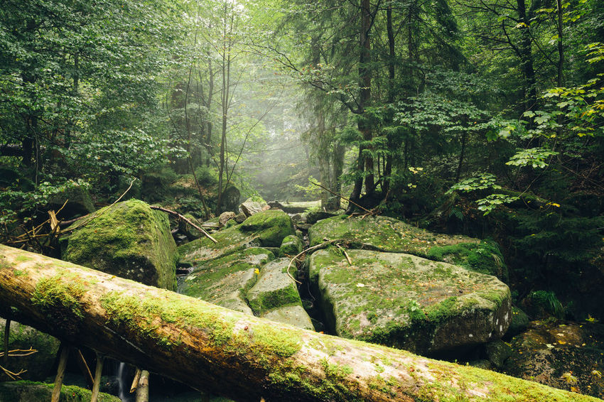 Wildness Green Color Ilsetal Beauty In Nature Branch Day Forest Germany Green Color Harz Harzmountains Moss Nature No People Oasis Outdoors Scenics Tranquil Scene Tranquility Tree Wald Waldlandschaft Wood - Material