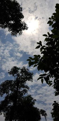 Tree Water Bird Silhouette Reflection Sky Animal Themes Cloud - Sky