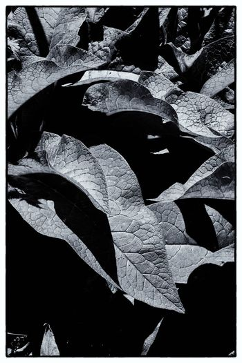 Autumn Close-up Countryside Day Landscape Leaf Monochrome Nature No People Outdoors Rural Foliage Suffolk Sunlight