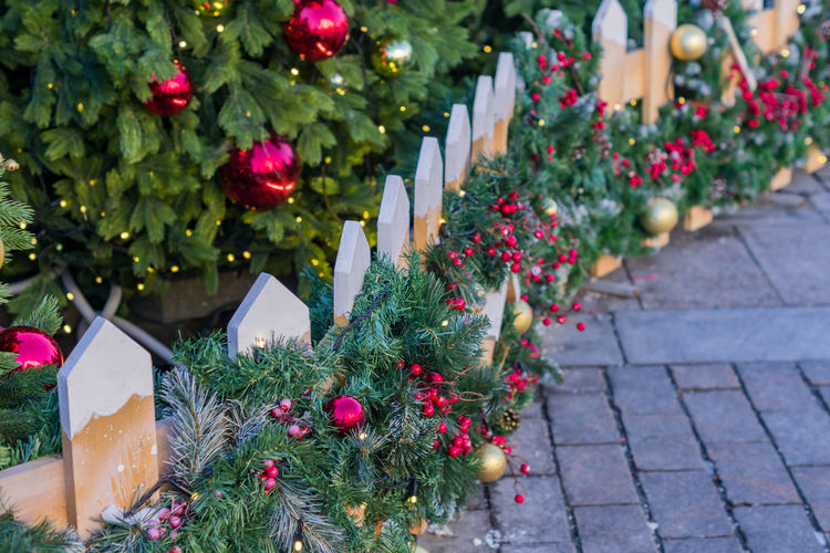 View of flowering plants on christmas tree