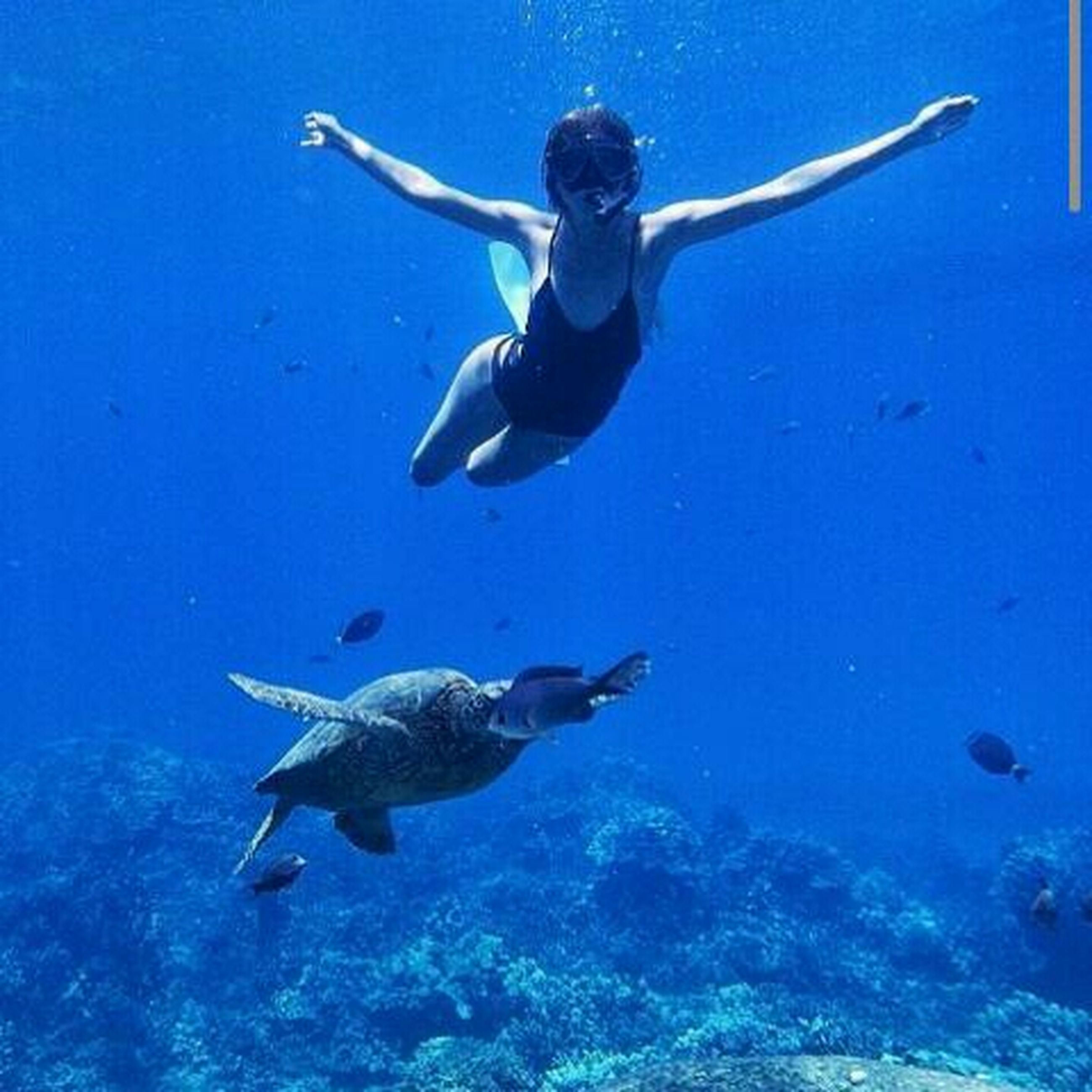 blue, animal themes, mid-air, full length, water, sea, swimming, animals in the wild, low angle view, wildlife, leisure activity, underwater, flying, jumping, fish, motion, sea life, vacations