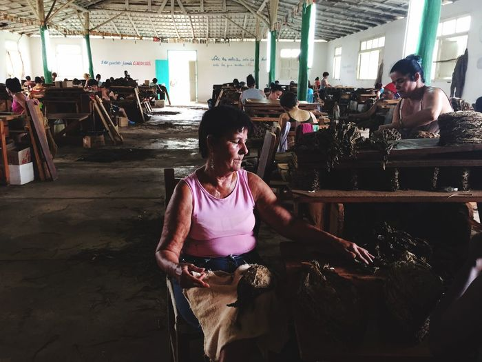 Hands At Work Cuba Cigar Factory Handmade Viñales