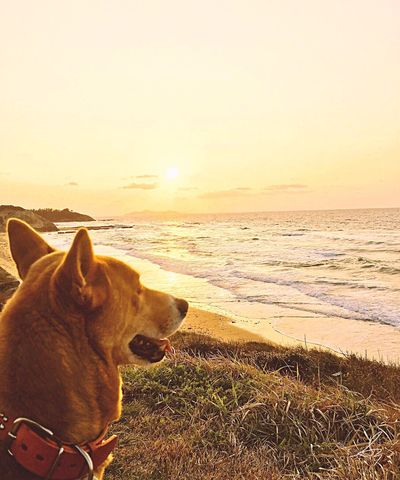 Lovely My Dog Shine Sea And Sky Ocean Waves Waves, Ocean, Nature What Are YOU Looking At? Beautiful View Beautiful Walking Around Sunset_collection Sunset Love Earth Landscapes With WhiteWall