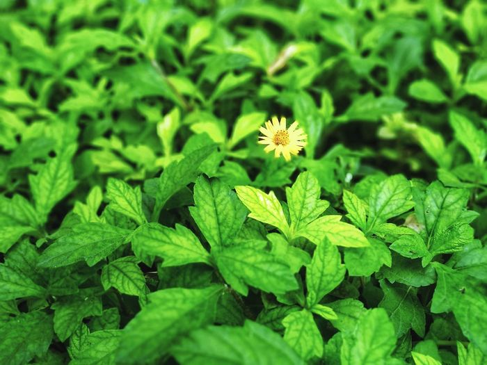 Flower Head Flower Leaf Alternative Medicine Social Issues Close-up Plant Green Color
