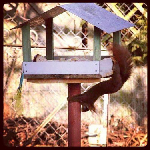 Eichhörnchen Instafavourite Tersdönensincap