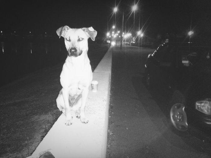 собака дворняжечка бедныйпес