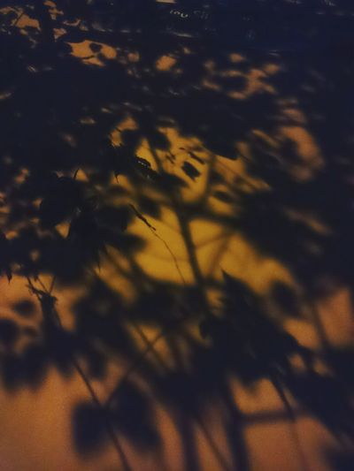 Backgrounds No People Close-up Outdoors Yellow Shadows & Lights Shadows Shadow Night