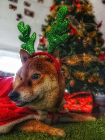 Is Santa