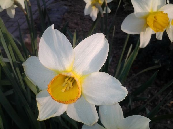 Streamzoofamily Flowerforfriends Spring Beautiful Happy Monday