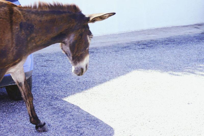 Close-Up Of Donkey Walking On Road