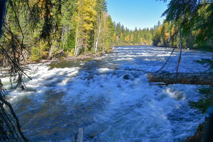 Murtle River