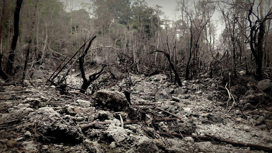 Kawahmati HutanMati Black And White