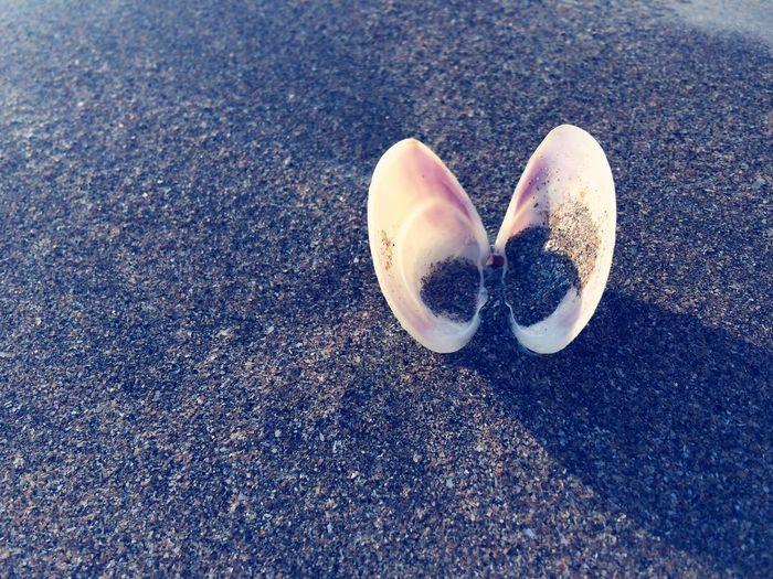 Shell Sea Shells Sand Beach Beachphotography Beach Photography Duncannon Beach, Ireland County Wexford