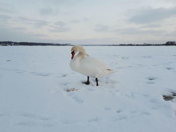 White birds on snow covered landscape against sky