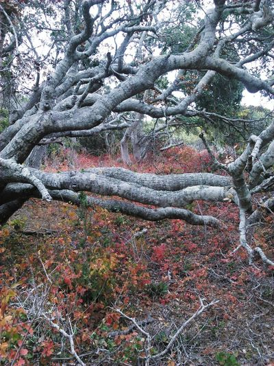 Ancient Tree Poison Oak Magical Trees Nature_collection Tree Trunk The Great Outdoors