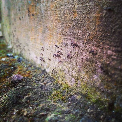 Ant from gadgetsAnt Animal Insect Instagram Instapic Instagood Latepost Like4like Likrforlike Morning Moment Photo Asus