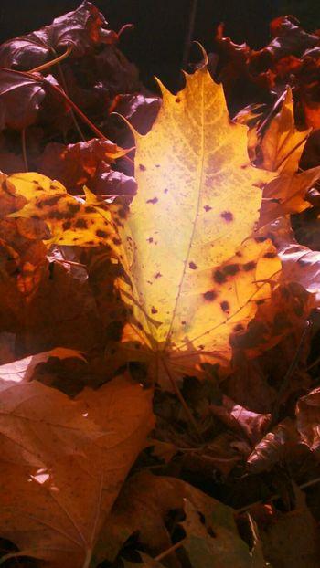 BlattWerk Herbst Sonne Zwanzig15