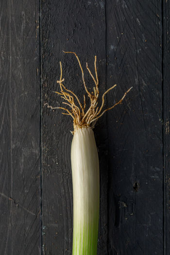 Close-up of dead plant against wall