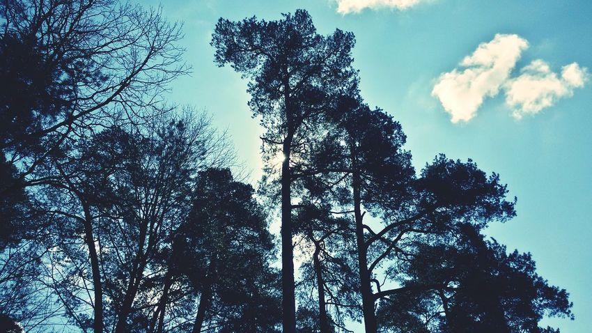 Drzewa Niebo Słońce Chmury