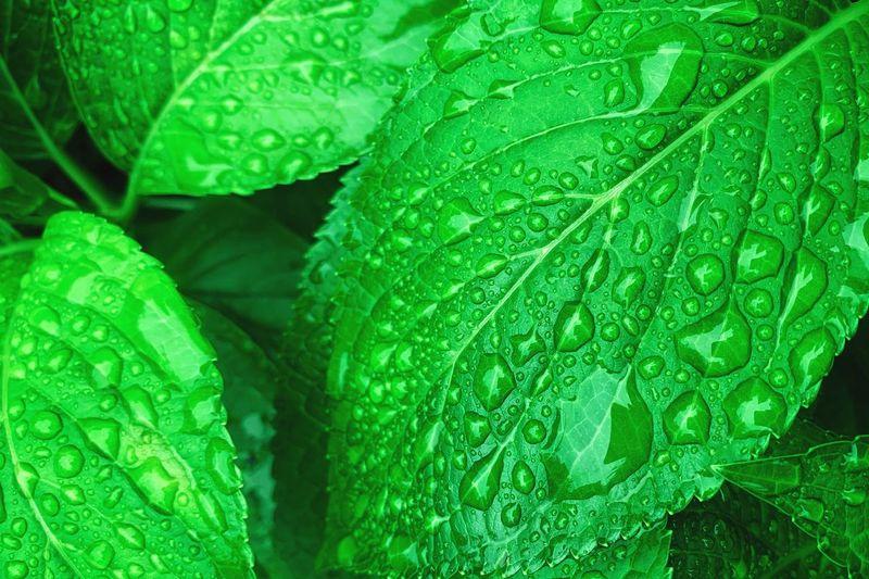 Plants Plant