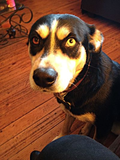 Cute Eyes Mydog Puppy❤ Mydogiscoolerthanyourkids Hello World Bff Loveher Akane Mydog♡ Hanging Out