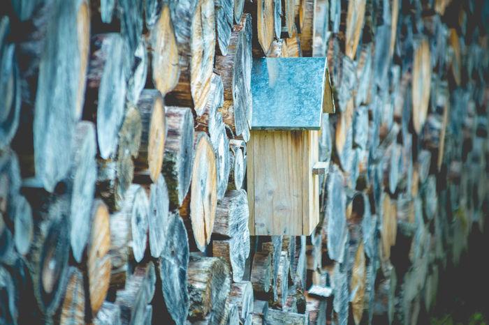 Drielandenpunkt in Vaals Aachen Draußen NRW Nordrhein-Westfalen Vaals Abundance Aktivität Backgrounds Close-up Day Dreiländereck Drielandenpunt Full Frame Hanging Large Group Of Objects No People Outdoors Wald